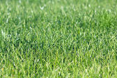 Green vibrant grass — Stock Photo