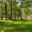 Summer forest on sunny morning — Stock Photo
