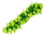 Row of green birch leaves — Stock Photo