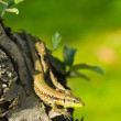 Lizard on tree trunk — Stock Photo #28864167