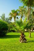 Tropical ornamental garden — Stock Photo