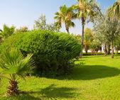 Jardin tropical vert — Photo