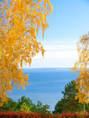 River over yellow trees — Stock Photo