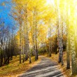 Pathway in autumn forest — Stock Photo