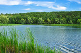 Forest river at summer day — Foto Stock