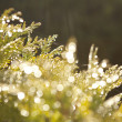 Bokeh backgorund with green trees elements - Stock Photo