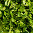 Stock Photo: Parsley leaves