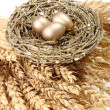 Stock Photo: Golden Nest Eggs