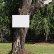 Empty board on a tree — Foto Stock
