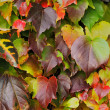 autumn leaves hintergrund — Stockfoto #35923217