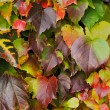 Stockfoto: Autumn leaves background