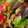 Photo: Autumn leaves background
