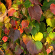 autumn leaves hintergrund — Stockfoto #39845897