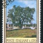 Olive tree — Stock Photo #11814615