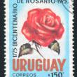 Uruguay Rose - Stock Photo
