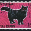 Fujeira cat - Foto Stock
