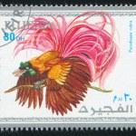 Tropical bird — Stock Photo #13289661