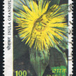 Stock Photo: Flower Showy inula