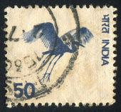 Fliegender kranich — Stockfoto