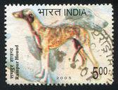 Dog Rampur hound — Stock Photo