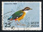 Bluewinged Pitta — Stock Photo