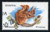 红松鼠 — 图库照片