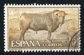 Bull — Zdjęcie stockowe