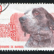 Dog Exhibition Madrid — Stock Photo