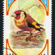 European Goldfinch — 图库照片