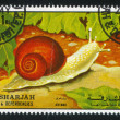 land snail — Stock Photo