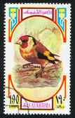 欧洲金翅雀 — 图库照片