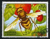 黄蜂 — 图库照片