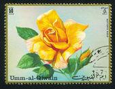 Gold Rose — Stock Photo