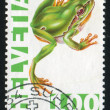 Green tree frog - Stok fotoraf
