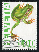 Green tree frog — Foto de Stock