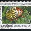 Potato beetle — Stock Photo