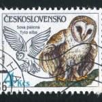 Owls — Stock Photo #21790749