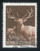 Red deer — Stock fotografie