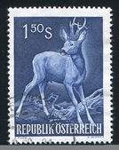 Roe buck — Stock Photo