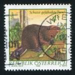 Beaver — Stock Photo #24461199