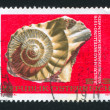 Ammonite - Stock Photo