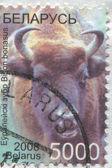 Europese bizon — Stockfoto