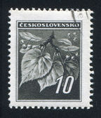 Lipa liście i pąki — Zdjęcie stockowe