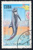 Dolphin Grampus griseus — Stock Photo