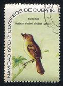 Bird Myadestes elisabeth — ストック写真