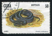 Serpente alsophis cantherigerus — Foto Stock