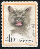 Evropská kočka — Stock fotografie