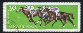 Galloping horses — Stock Photo