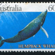 Humpback whale — Stock Photo