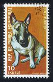 Bull terrier bull terrier — Stockfoto